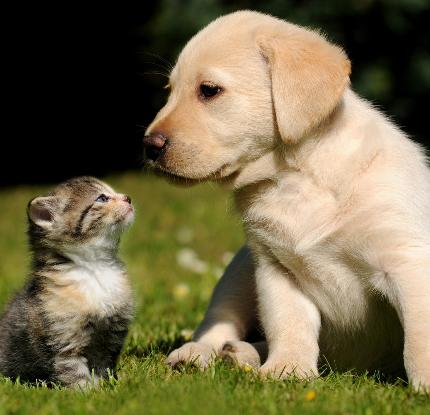 Если вы решили завести домашних животных…